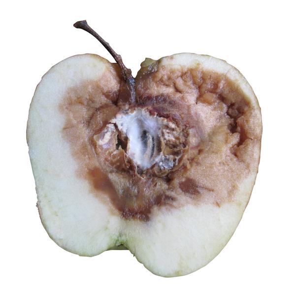 rotte appel zwarte komijn olie